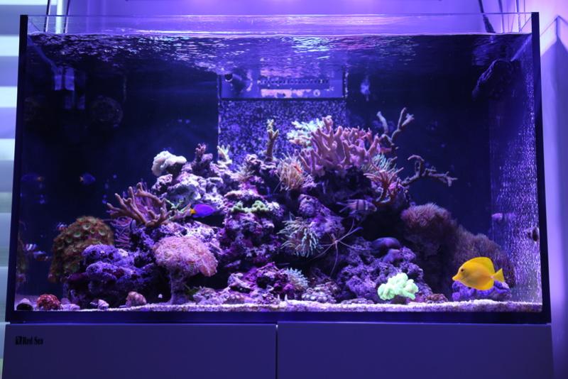 mon reefer 250 Aquari11