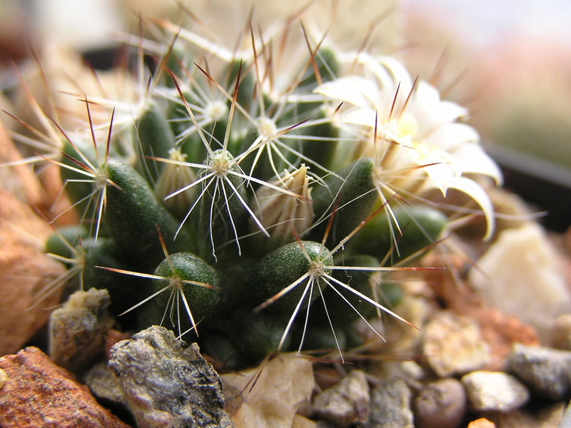 Cactus under carbonate 16 Fm_pil11