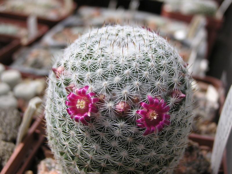 Cactus under carbonate. 17. Started! P1010212