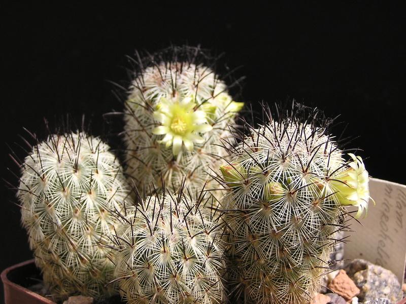 Cactus under carbonate. 17. Started! P1010213