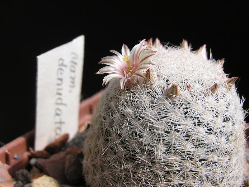 Cactus under carbonate. 17. Started! P1010214