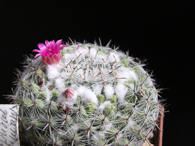 Cactus under carbonate. 17. Started! P1010217