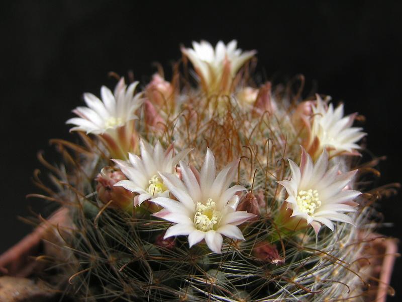 Cactus under carbonate. 17. Started! Um_mat10