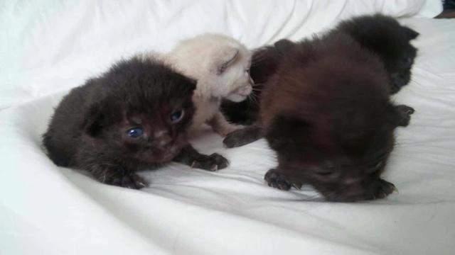 De kittens van El Campo del sur 1025