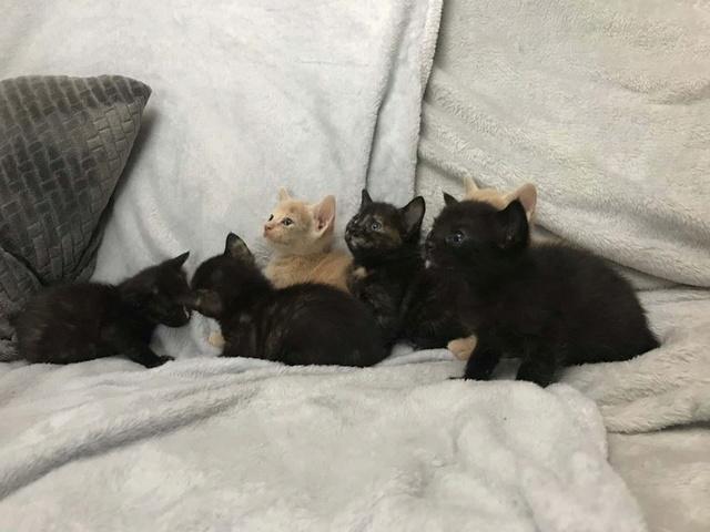 De kittens van El Campo del sur 1813