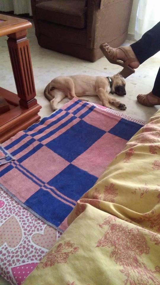 GEADOPTEERD   pup Tokyo met gebroken kaak. 22290510