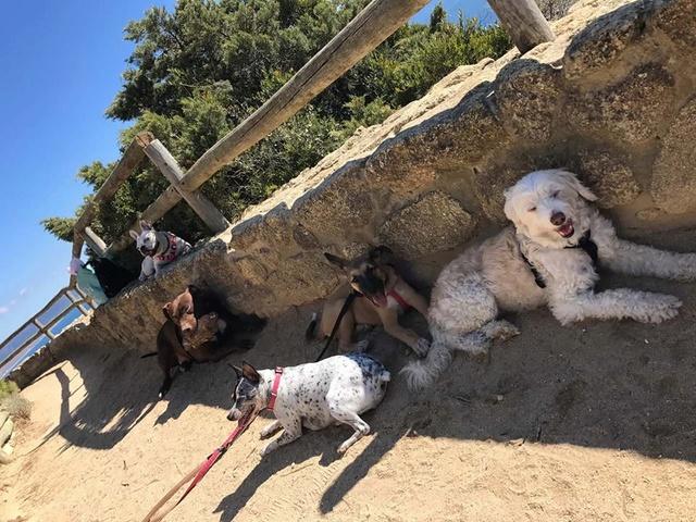 GEADOPTEERD   pup Tokyo met gebroken kaak. 22809910