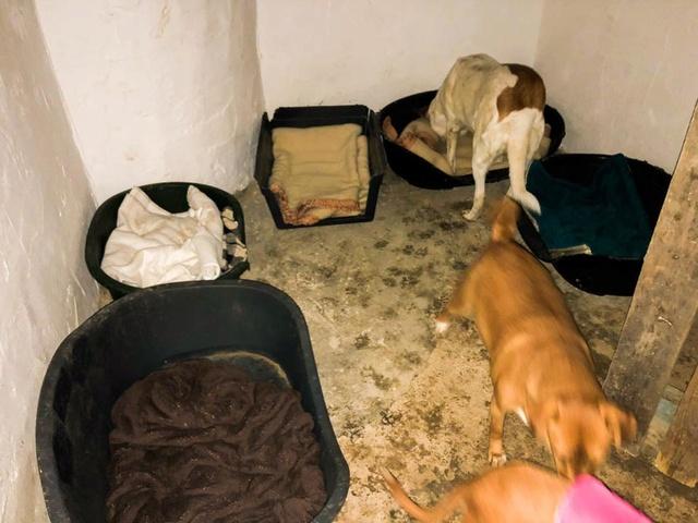 6 okt  - 2 pallets voor Huellas con Esperanza  25289710