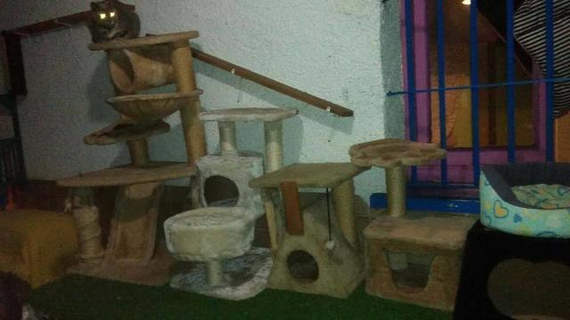 1 pallet voor Canis y Felis - 5 januari 27140511
