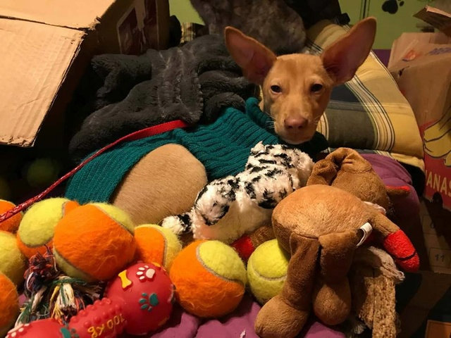 1 pallet voor Canis y Felis - 5 januari 27152410