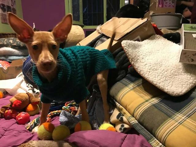 1 pallet voor Canis y Felis - 5 januari 27294510