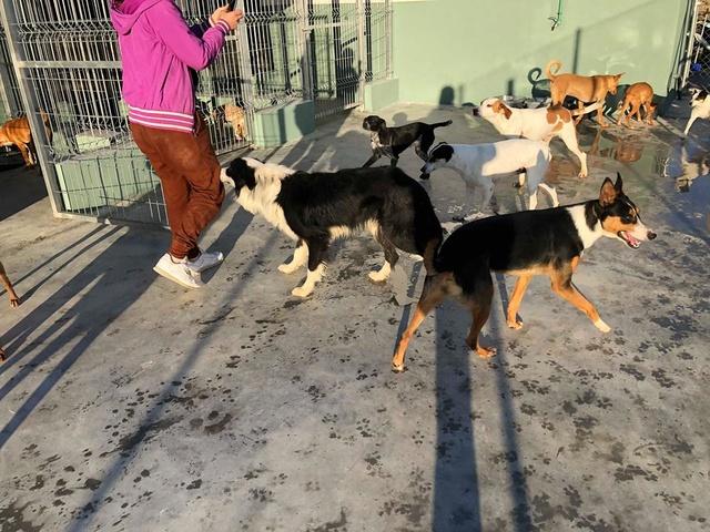 6 okt  - 2 pallets voor Huellas con Esperanza  27721011