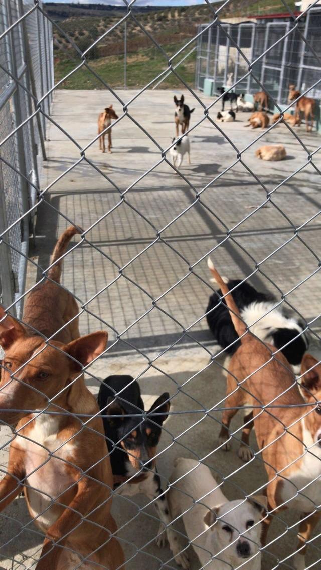 6 okt  - 2 pallets voor Huellas con Esperanza  27906710