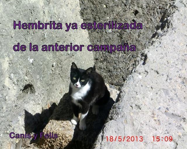 Kat van El Campo del Sur  ( RIP) 28378910