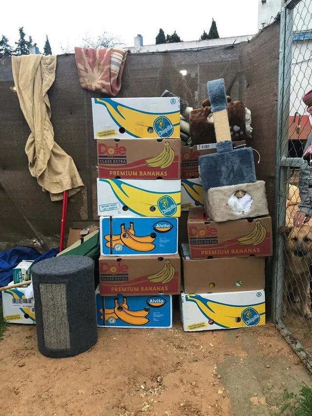 9 Feb - 2 pallets aangekomen bij Canis y Felis 29028011