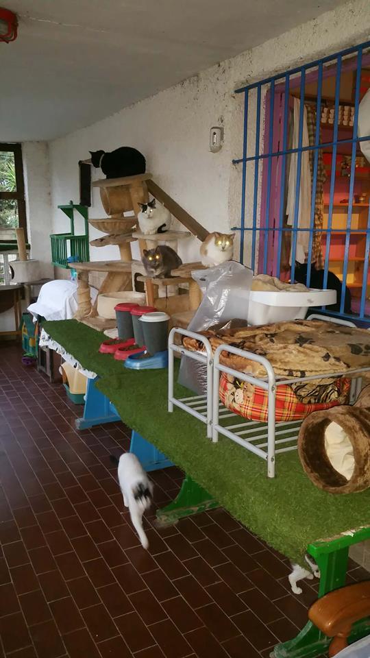 9 Feb - 2 pallets aangekomen bij Canis y Felis 29101310