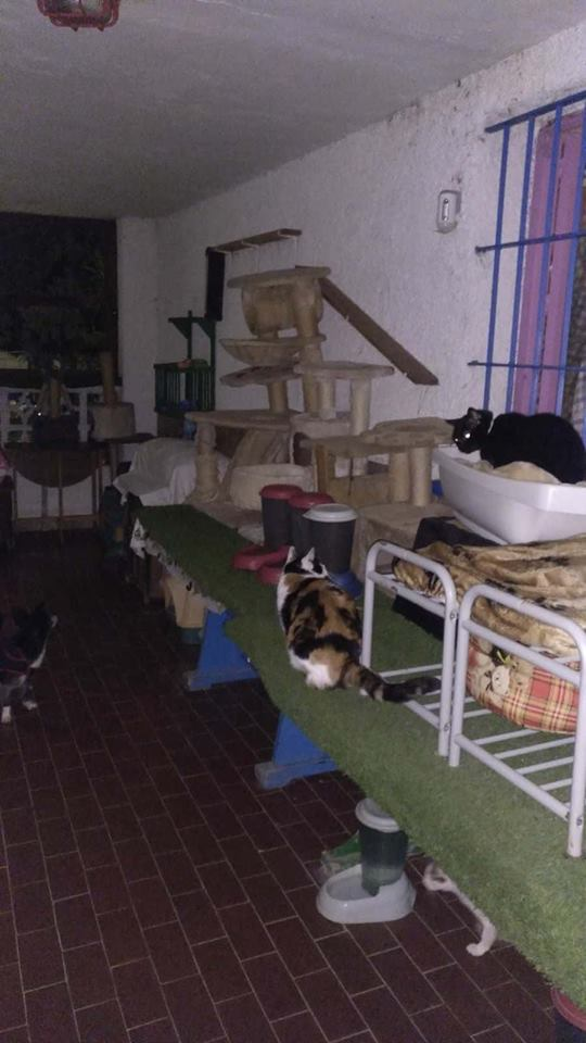 9 Feb - 2 pallets aangekomen bij Canis y Felis 29101910