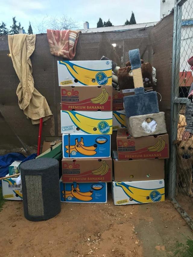 9 Feb - 2 pallets aangekomen bij Canis y Felis 29103310