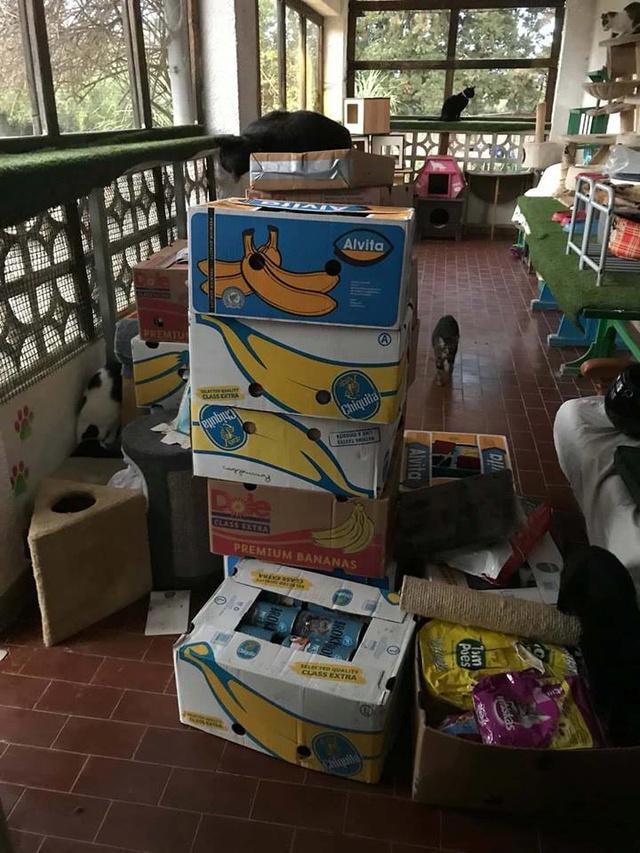 9 Feb - 2 pallets aangekomen bij Canis y Felis 29103311