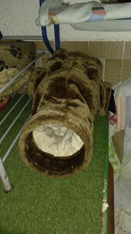 9 Feb - 2 pallets aangekomen bij Canis y Felis 29136510