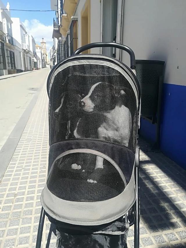 9 Feb - 2 pallets aangekomen bij Canis y Felis 29261010