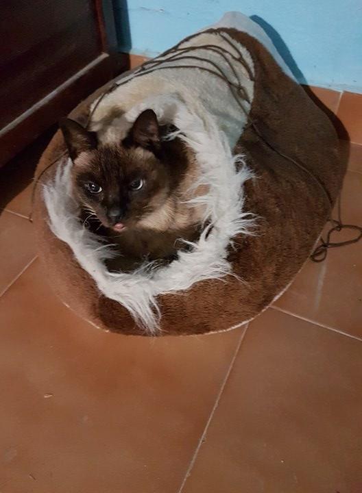 1 pallet voor de dieren van La Pepa 29750310