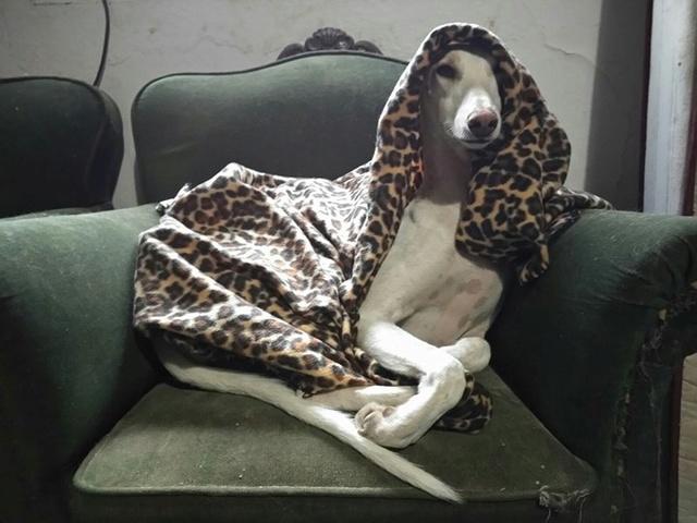 1 pallet voor de dieren van La Pepa 29750710