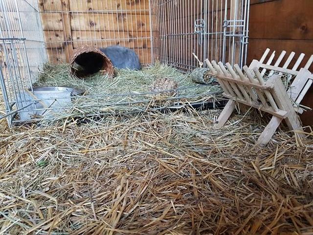 1 pallet voor de dieren van La Pepa 29853010