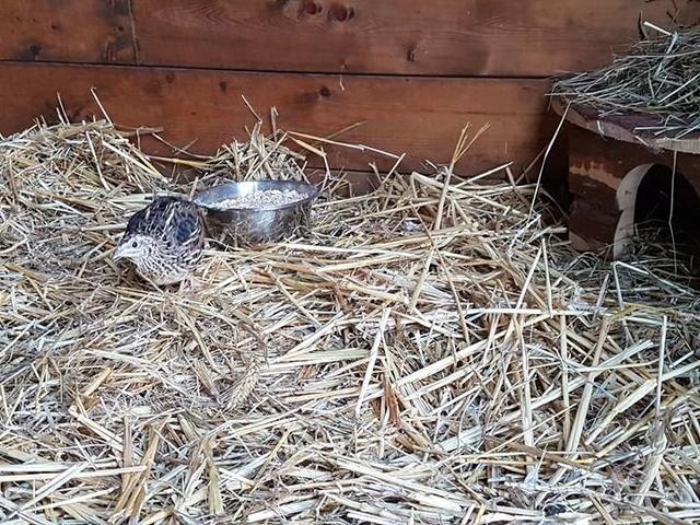 1 pallet voor de dieren van La Pepa 29855110