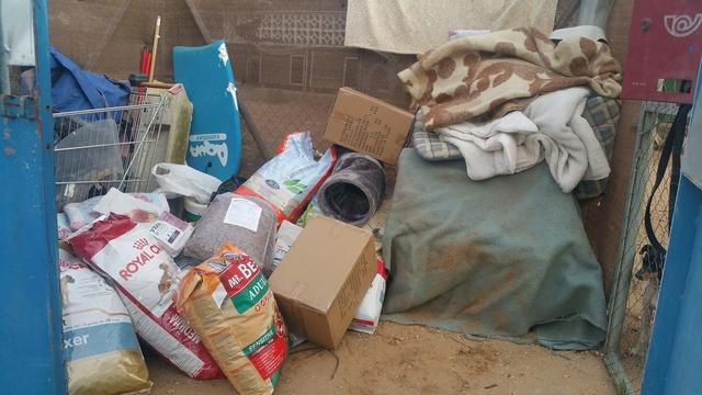 Transport Canis y Felis en de katten bij El Campo del Sur 30069710