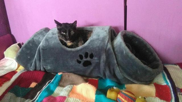 Transport Canis y Felis en de katten bij El Campo del Sur 30070610