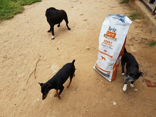 Transport Canis y Felis en de katten bij El Campo del Sur 30127210