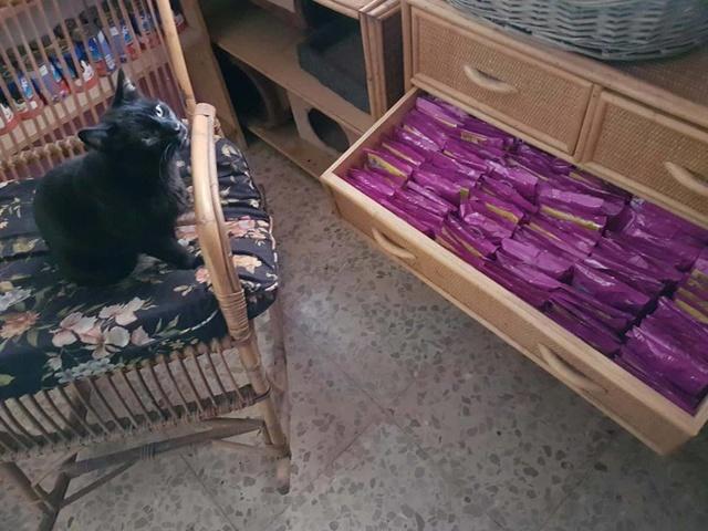 Transport Canis y Felis en de katten bij El Campo del Sur 30127510
