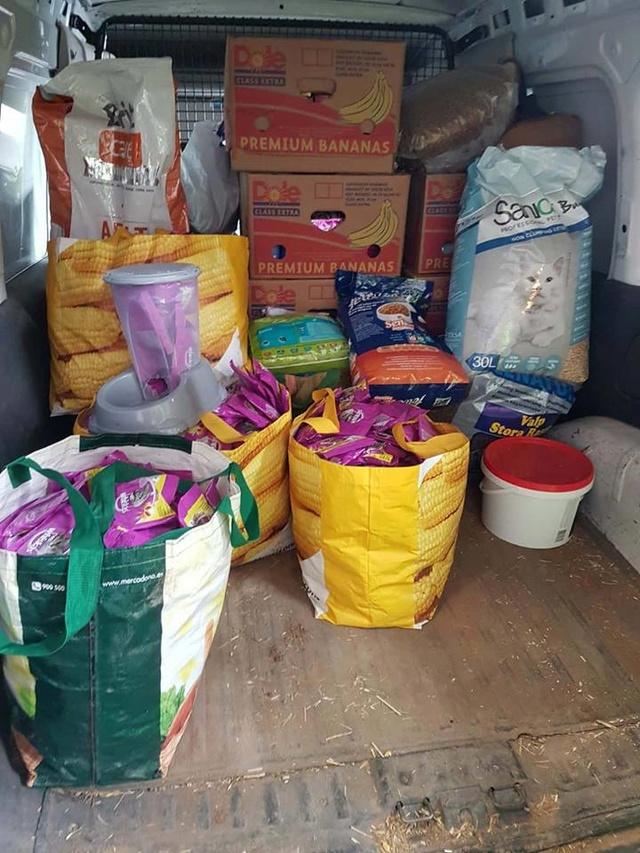 Transport Canis y Felis en de katten bij El Campo del Sur 30127511