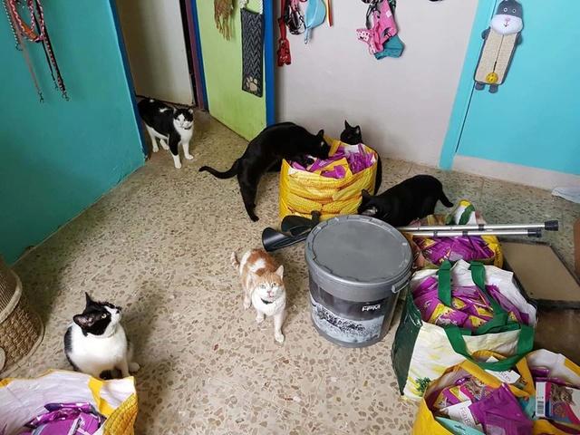 Transport Canis y Felis en de katten bij El Campo del Sur 30127710