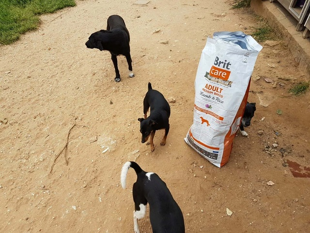 Transport Canis y Felis en de katten bij El Campo del Sur 30261612