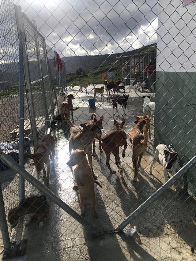 Huellas con Esperanza - Hulp dmv transporten met hulpgoederen. 30265212