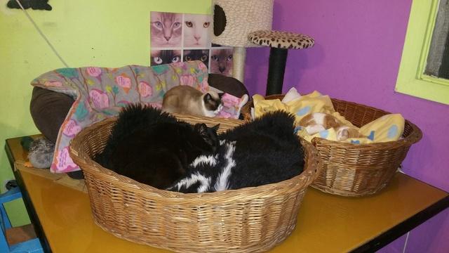 Transport Canis y Felis en de katten bij El Campo del Sur 30441611