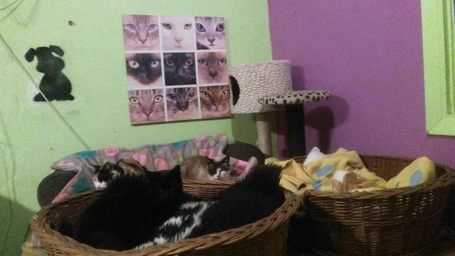 Transport Canis y Felis en de katten bij El Campo del Sur 30531211