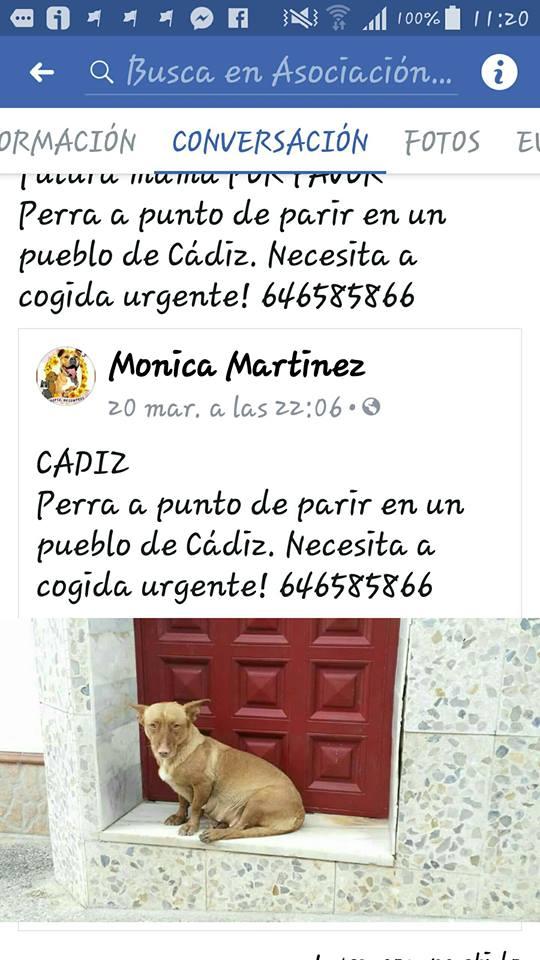 CA Adara  32130410