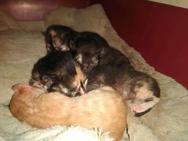 Nog meer kittens voor La pepa 33583310