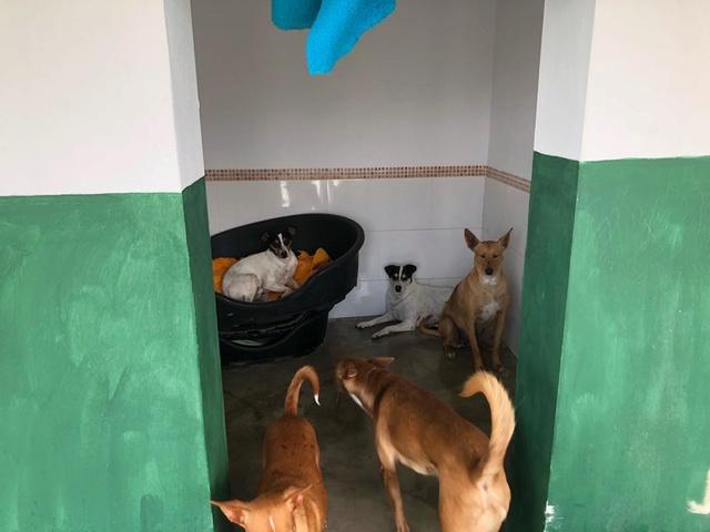 Huellas con Esperanza - Hulp dmv transporten met hulpgoederen. 33622110