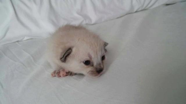 De kittens van El Campo del sur 436