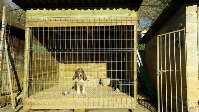 50% actie - Nieuwe kennels voor de honden van Masquechuchos 68316211