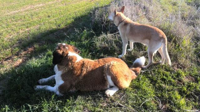De honden van Palili 818cb510