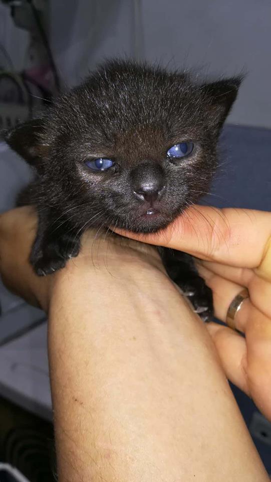De kittens van El Campo del sur 829