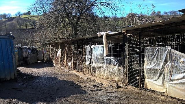 50% actie - Nieuwe kennels voor de honden van Masquechuchos Alberg10