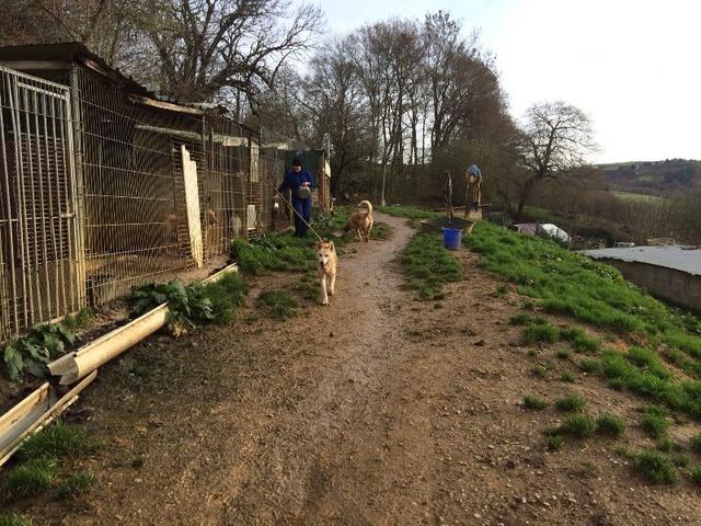 50% actie - Nieuwe kennels voor de honden van Masquechuchos Alberg11
