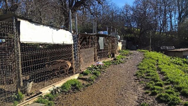 50% actie - Nieuwe kennels voor de honden van Masquechuchos Alberg12