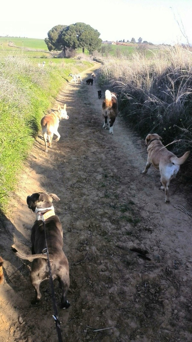 De honden van Palili B36cfe10